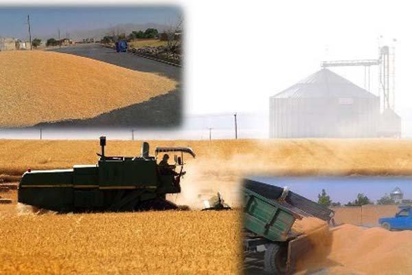 رکورد خرید گندم طی 40 سال اخیر در کردستان شکسته شد
