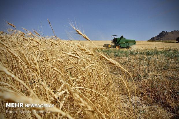 تشکل های کشاورزی با محوریت بازرگانی در استان سمنان ایجاد می شوند