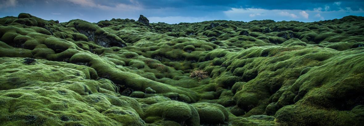 ایسلند فقط برفی نیست؛ جاذبه سبزی که روایتی وحشتناک دارد ، اسیر طبیعت شوید!