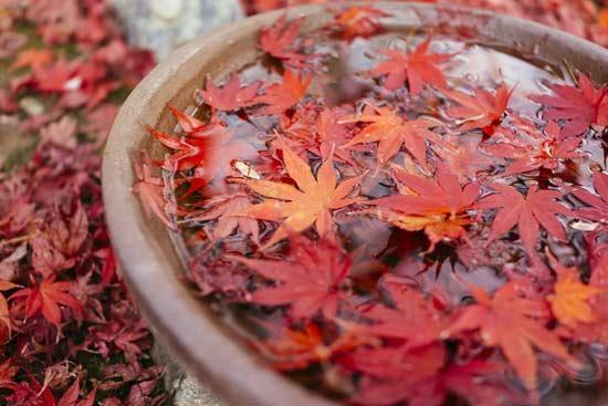 عاشقانه های شاعرانه برای پاییز رنگارنگ را بخوانید