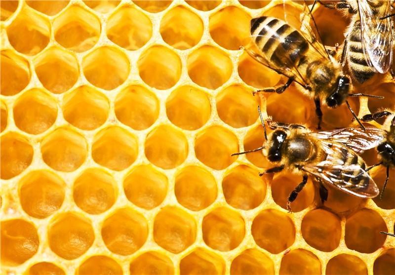 23 تن عسل اردبیل به مالزی و امارات صادر شد