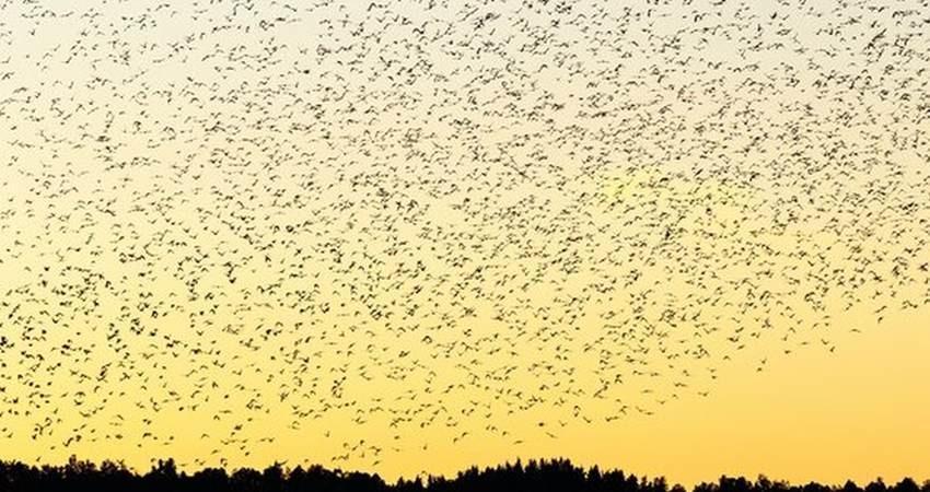 روز ملی پرنده نگری در تهران برگزار می گردد