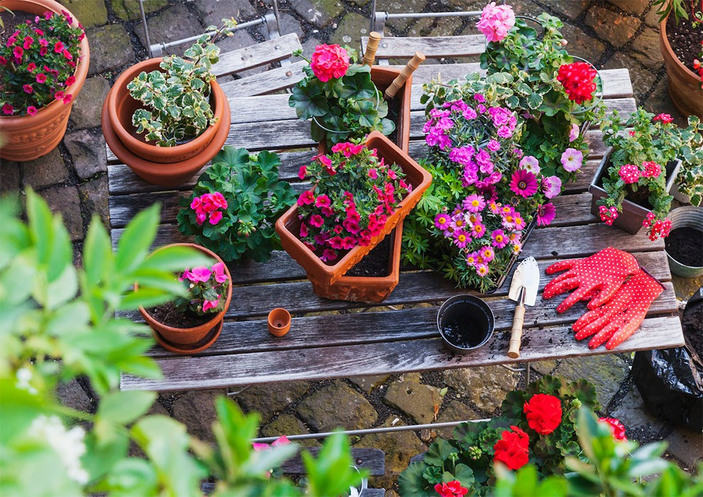 برای باغچه حیاط کدام گیاه را بکاریم؟